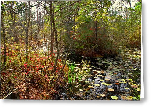 Charleston Greeting Cards - Swamps in SC Greeting Card by Susanne Van Hulst
