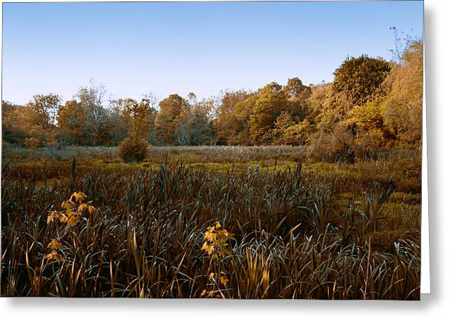 Fall Grass Greeting Cards - Swampy  01 Greeting Card by Ross Powell