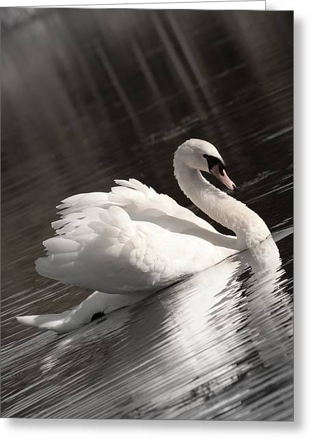 Swan 2 Greeting Card by Nan Schefcick