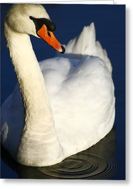 Muted Greeting Cards - Swan and Ripples Greeting Card by Christopher Kirby