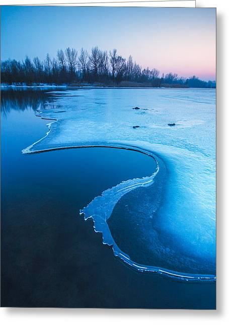 Blues Greeting Cards - Swan Greeting Card by Davorin Mance