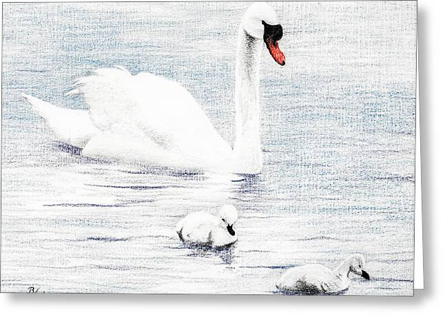 Water Fowl Greeting Cards - Swan Family Greeting Card by Brent Ander