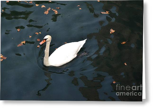 Swan In Autumn Greeting Card by Kathleen Pio