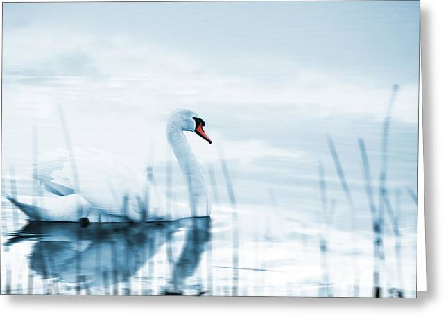 Swan Greeting Card by Jaroslaw Grudzinski