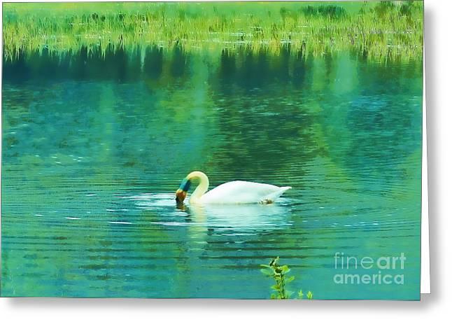Swan Lake Greeting Card by Judi Bagwell