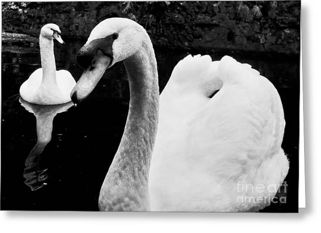 Nabucodonosor Perez Greeting Cards - Swan lake Greeting Card by Nabucodonosor Perez