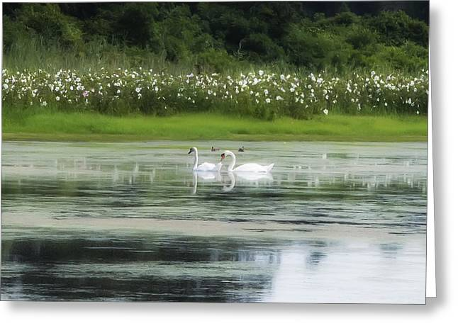 Water Fowl Greeting Cards - Swan Pond Greeting Card by Bill Cannon