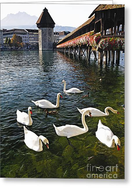 Reuss Greeting Cards - Swans of the Chapel Bridge Greeting Card by George Oze
