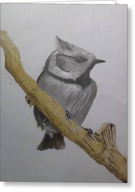 Wild Life Drawings Greeting Cards - Swedis Birds Greeting Card by Per-erik Sjogren