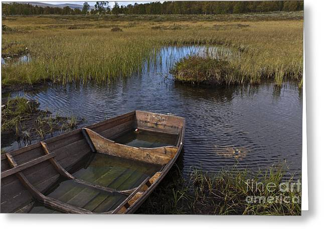 Row Boat Greeting Cards - Swedish swamp Greeting Card by Heiko Koehrer-Wagner