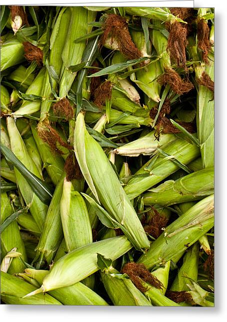 Sweet Corn Greeting Cards - Sweet Corn Greeting Card by Lauri Novak