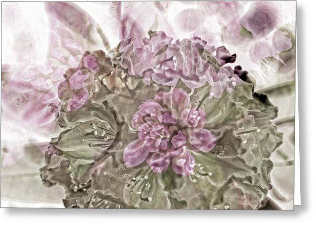 Floral Photos Mixed Media Greeting Cards - Sweet Dreams Greeting Card by Bonnie Bruno