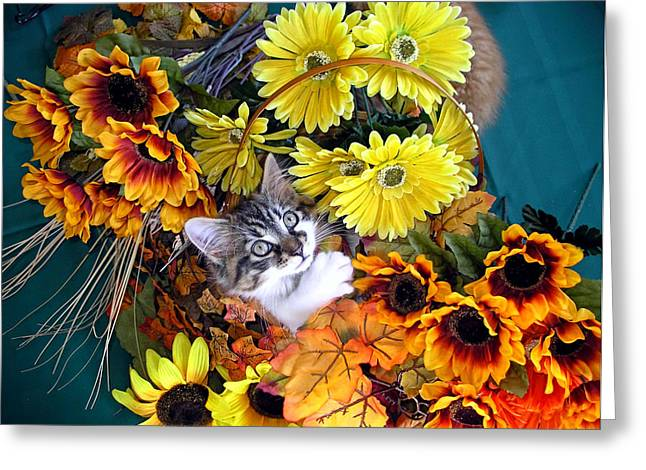 Kitteh Greeting Cards - Sweet Kitten in a Fall Flower Basket with Large Eyes Looking Up - Kitty Cat Grasping Autumn Leaves Greeting Card by Chantal PhotoPix