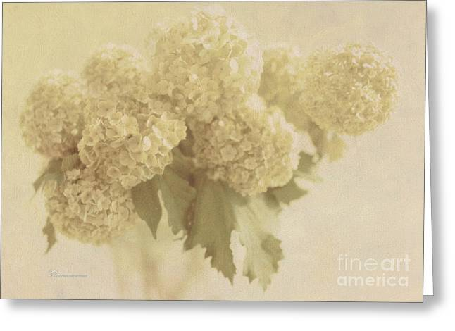 Feminine Greeting Cards - Sweet Memories Greeting Card by Georgiana Romanovna