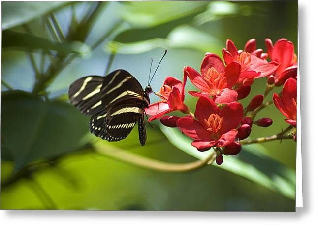 Colorful Photos Greeting Cards - Sweet Nectar Greeting Card by Carolyn Marshall