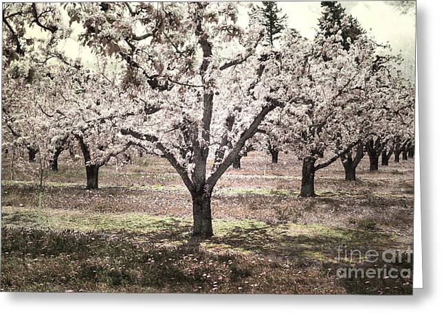 Orchards Prints Greeting Cards - Sweet Orchard Dream Greeting Card by Andrea Hazel Ihlefeld