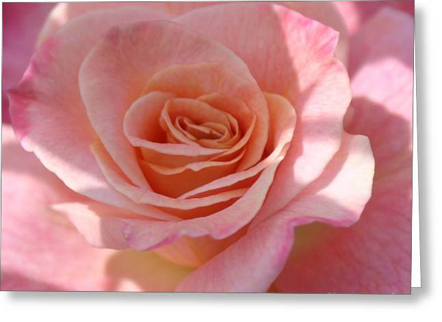 Photohraphy Greeting Cards - Sweet Smell of Morning Greeting Card by Robert  Torkomian