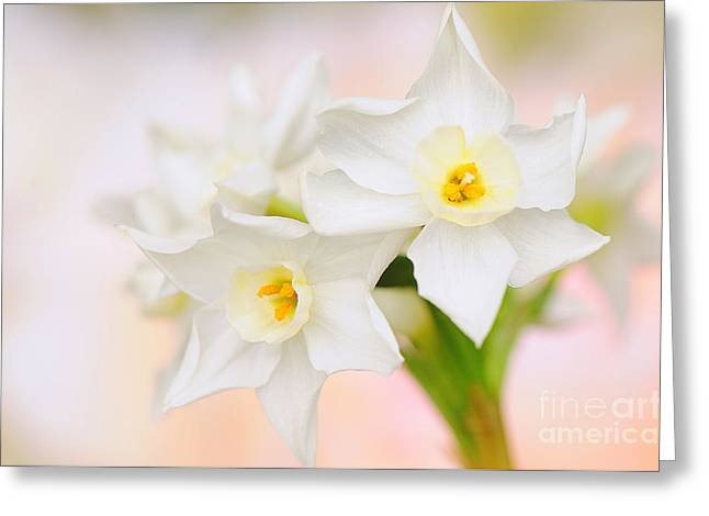 Close Focus Floral Greeting Cards - Sweet spring Greeting Card by Jacky Parker