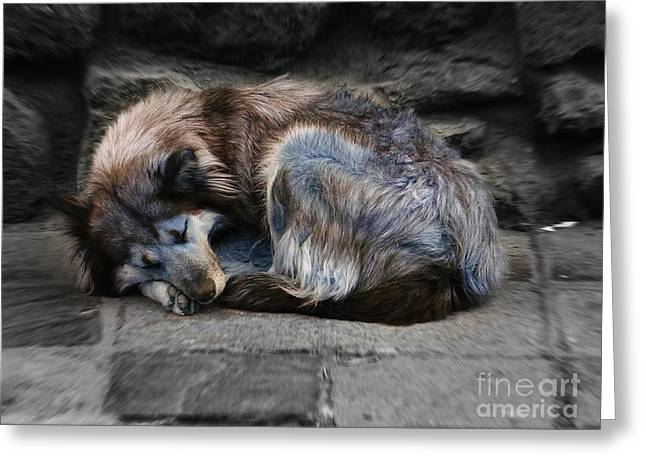 Pictures Of Dogs Greeting Cards - Sweet Street Dog 1 Greeting Card by Xueling Zou