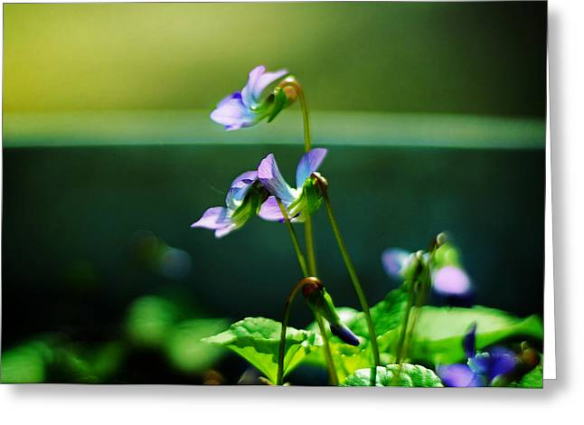 Floriography Greeting Cards - Sweet Violets Smile Greeting Card by Rebecca Sherman