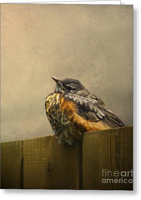 Robin Greeting Cards - Sweetly Sitting Greeting Card by Jan Piller