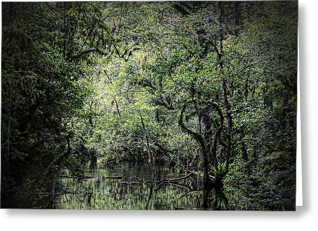 Sweetwater Greeting Cards - Sweetwater Strand Greeting Card by Rudy Umans