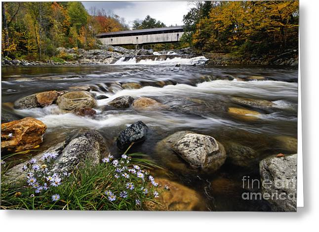 Aster Greeting Cards - Swiftwater Covered Bridge - D007089 Greeting Card by Daniel Dempster