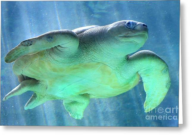 Green Sea Turtle Greeting Cards - Swimmer Greeting Card by Dan Holm