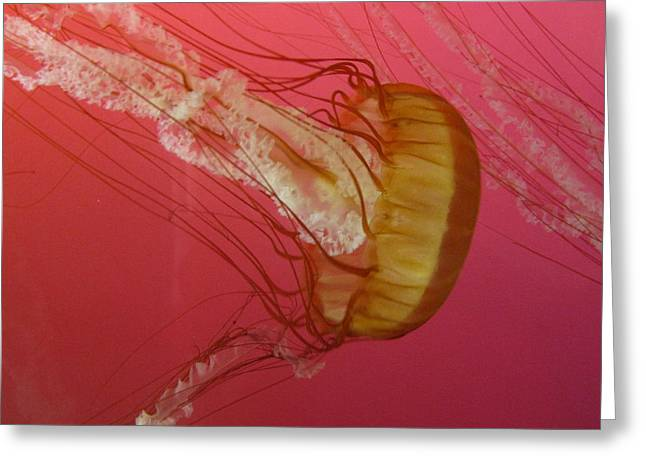 Jelly Fish Greeting Cards - Swimming Jelly Greeting Card by Vijay Sharon Govender