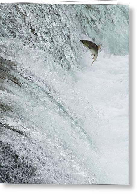 Swimming Upstream Greeting Card by Gloria & Richard Maschmeyer