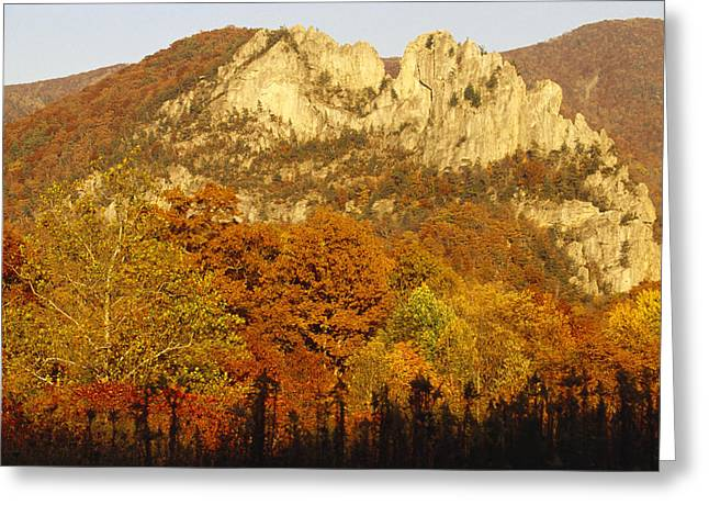 Plant Color Changes Greeting Cards - Sycamore And Oak Trees At Sunset Greeting Card by Raymond Gehman