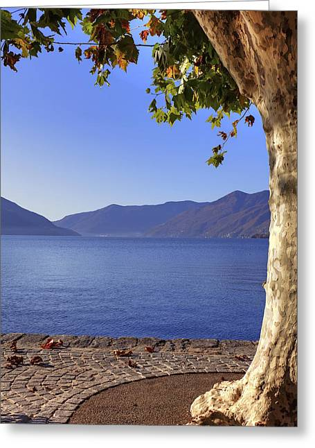 sycamore tree at the Lake Maggiore Greeting Card by Joana Kruse