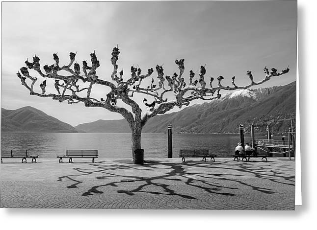 Plane Trees Greeting Cards - sycamore trees in Ascona - Ticino Greeting Card by Joana Kruse