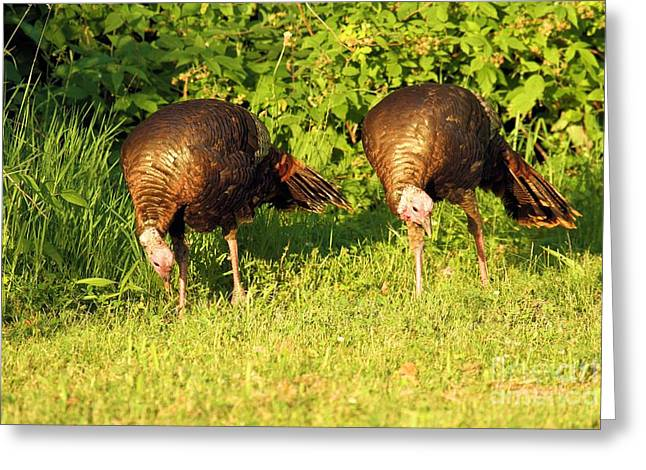 Thanks Giving Greeting Cards - Synchro Greeting Card by Adam Jewell