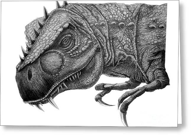 Dinosaurs Drawings Greeting Cards - T-Rex Greeting Card by Murphy Elliott