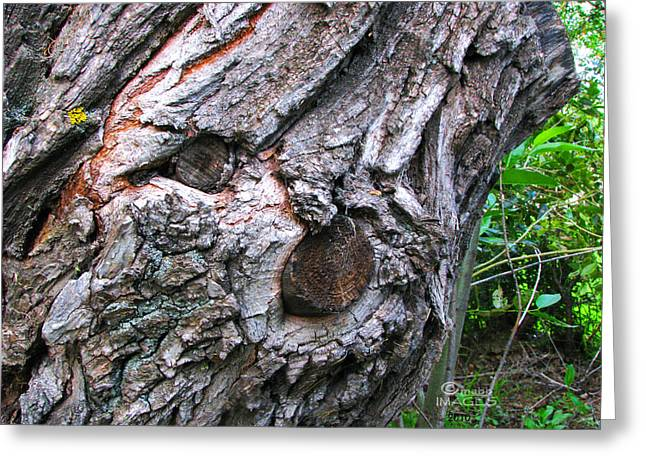 Ent Photographs Greeting Cards - Tabby Ent Greeting Card by Maurice Beebe