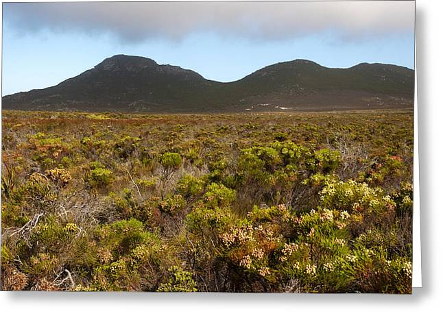 Cape Town Greeting Cards - Table Mountain National Park Greeting Card by Fabrizio Troiani