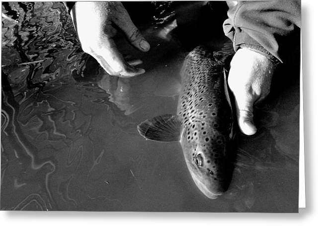 Trout Photograph Greeting Cards - Tag Greeting Card by Justin  Olson