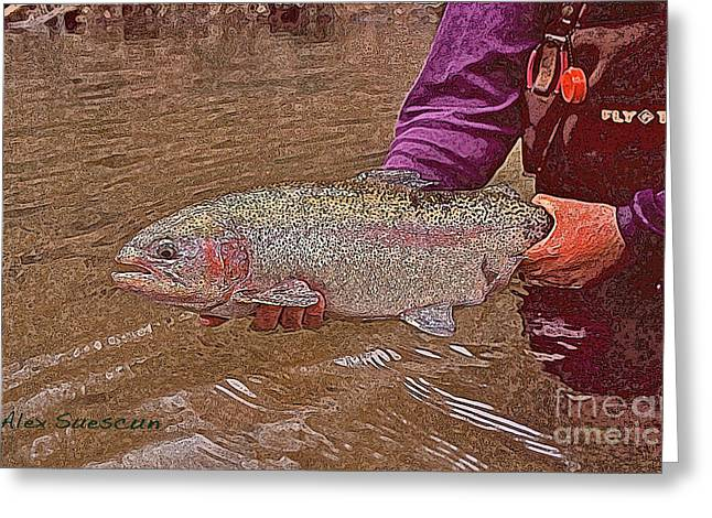 Rainbow Trout Drawings Greeting Cards - Tailwater Bow Greeting Card by Alex Suescun