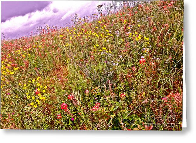 Wild Flowers Of Texas Greeting Cards - Take a Walk on the Wild Side Greeting Card by Chuck Taylor