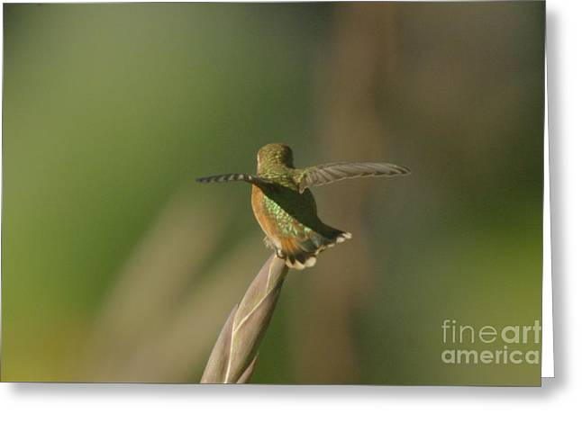 Take Off  Greeting Card by Jeff Swan