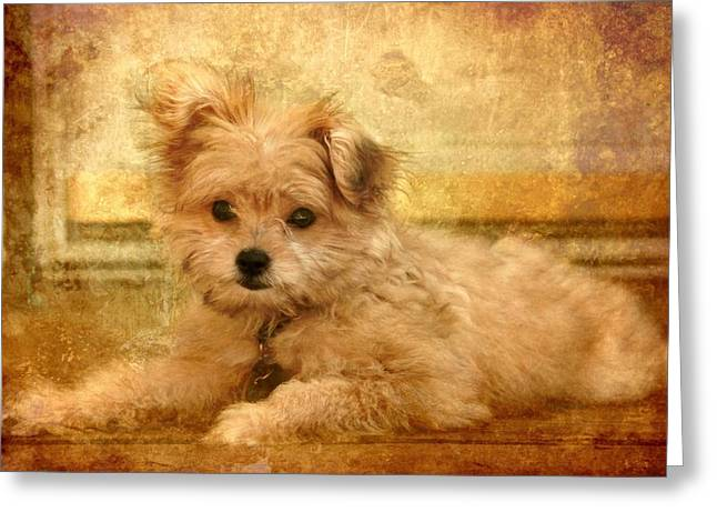 Purebreed Greeting Cards - Taking A Break Greeting Card by Angie Tirado
