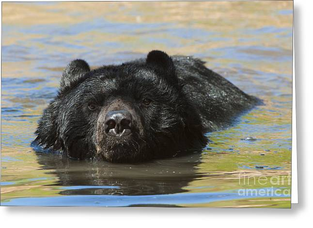 Taking A Dip Greeting Card by Sandra Bronstein