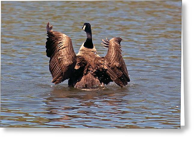 Geese Pyrography Greeting Cards - Taking flight Greeting Card by Bobbi Smith