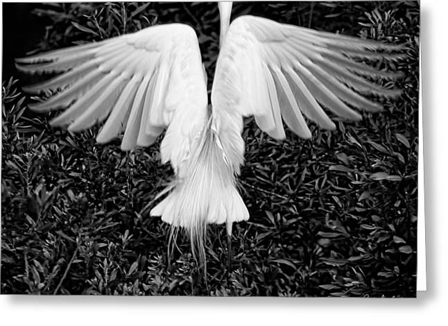 South Carolina Greeting Cards - Taking Off Greeting Card by Phill  Doherty