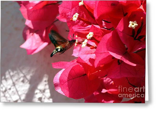 Taking The Nectar Greeting Card by John Chatterley