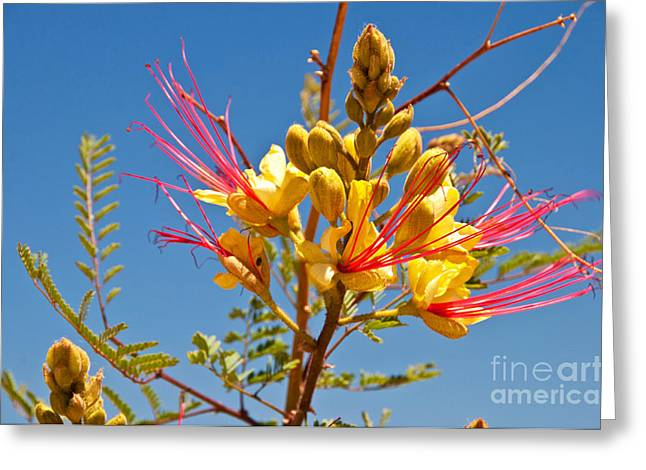 Green And Yellow Greeting Cards - Tall and Bright Greeting Card by Bob and Nancy Kendrick