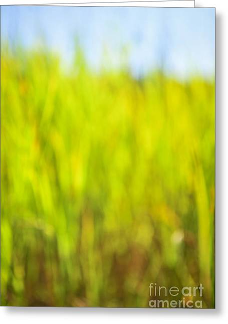 Grass Greeting Cards - Tall grass Greeting Card by Elena Elisseeva
