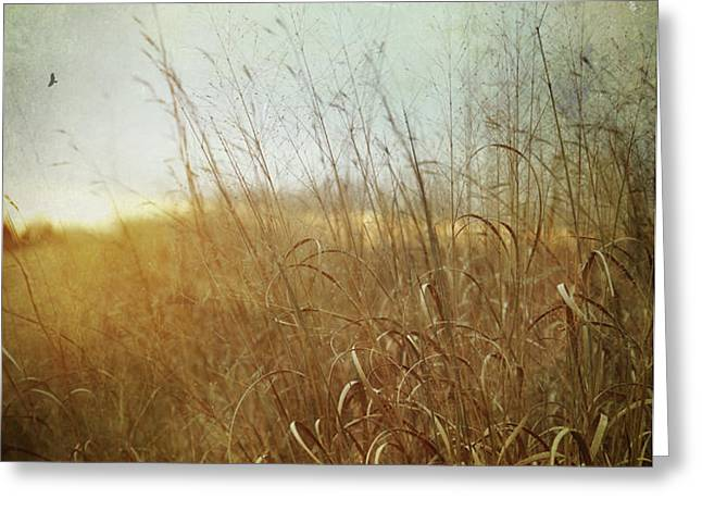Tall grass growing in late autumn Greeting Card by Sandra Cunningham