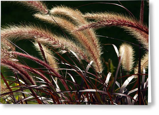 Jim Nelson Greeting Cards - Tall Grass Greeting Card by Jim Nelson